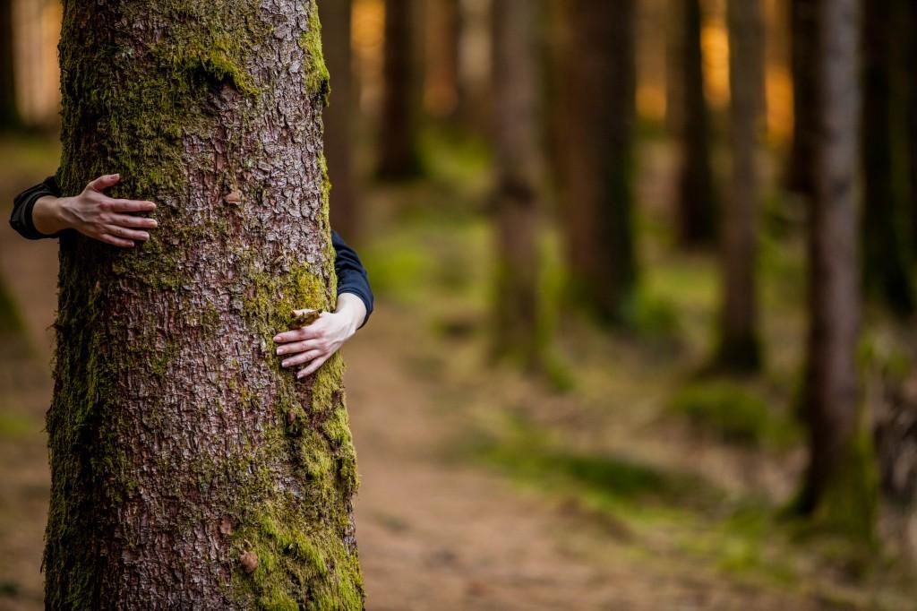 PEFC-madera-ecologica-sostenible