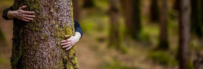 En Muebles LUFE apostamos por madera ecológica con certificado PEFC.