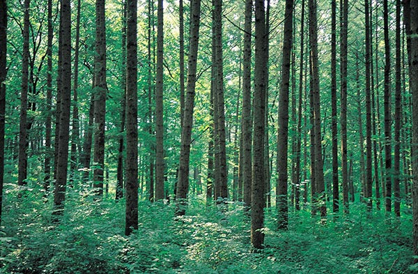 bosques sostenibles