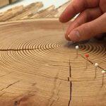 Cómo leer los anillos de un árbol