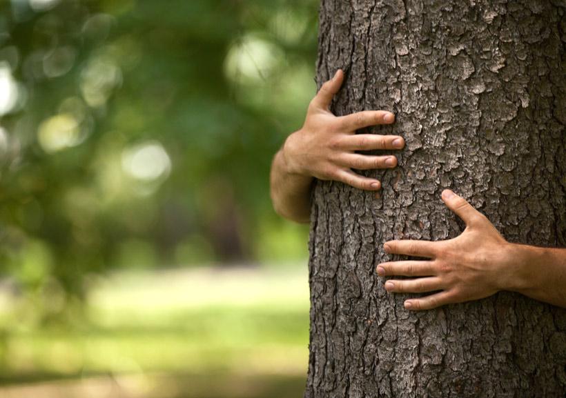 comprar muebles ecológicos de madera maciza con certificado PEFC
